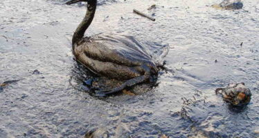 Obama's Twist of BP's Arm Stirs Debate on Frequent Tactic