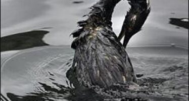 Gulf of Mexico Presents Unprecedented Toxicity Problems